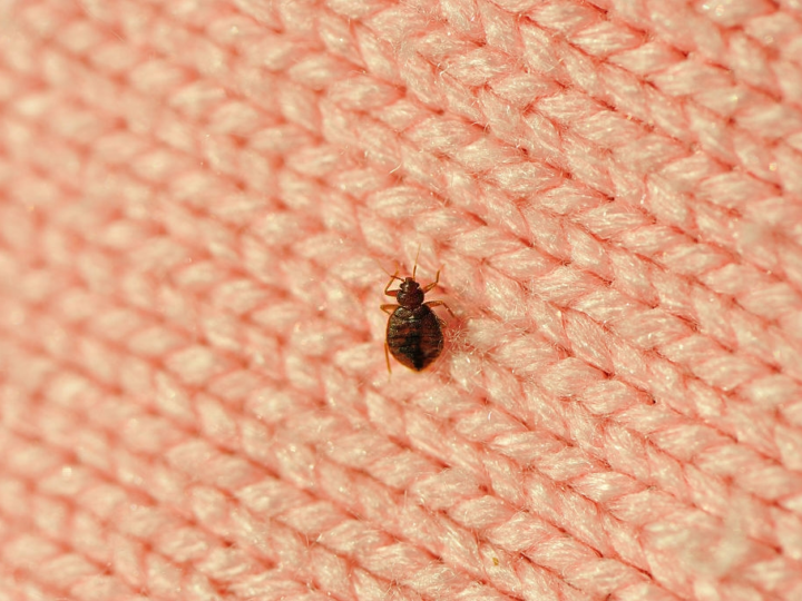 Eliminate Bed Bugs Step By Step