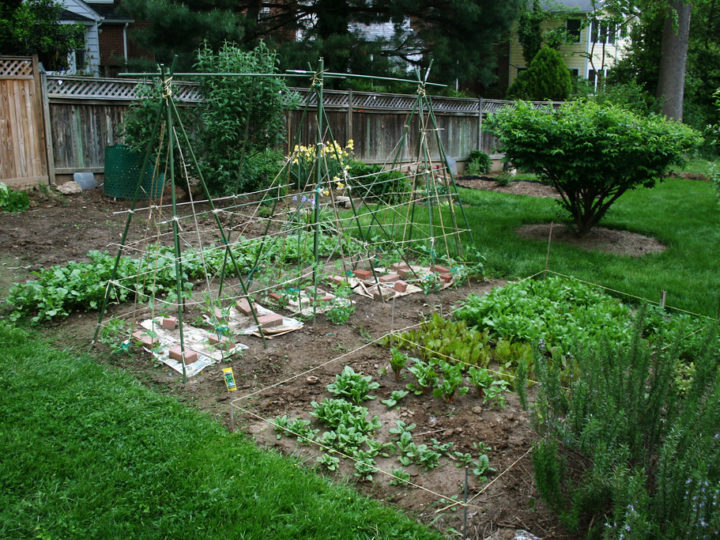How to start a vegetable garden from scratch?