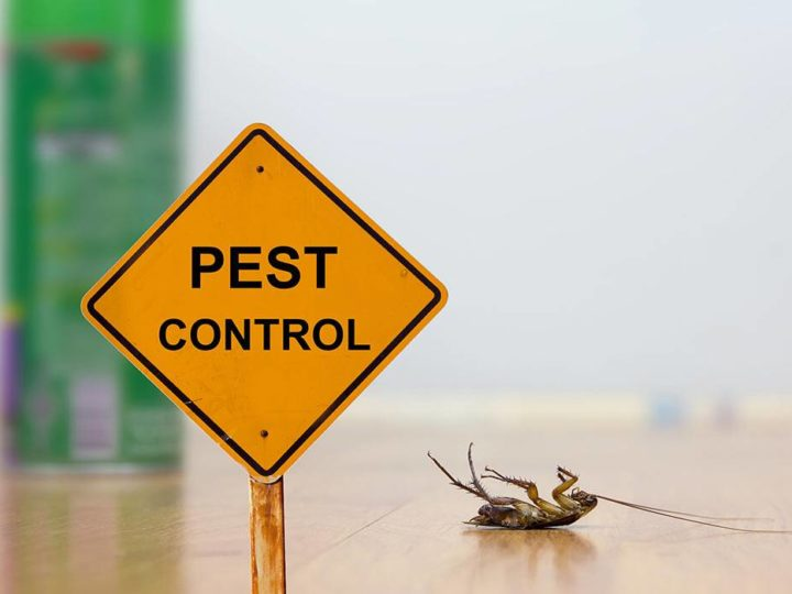 Why Do You Need Pest Control?