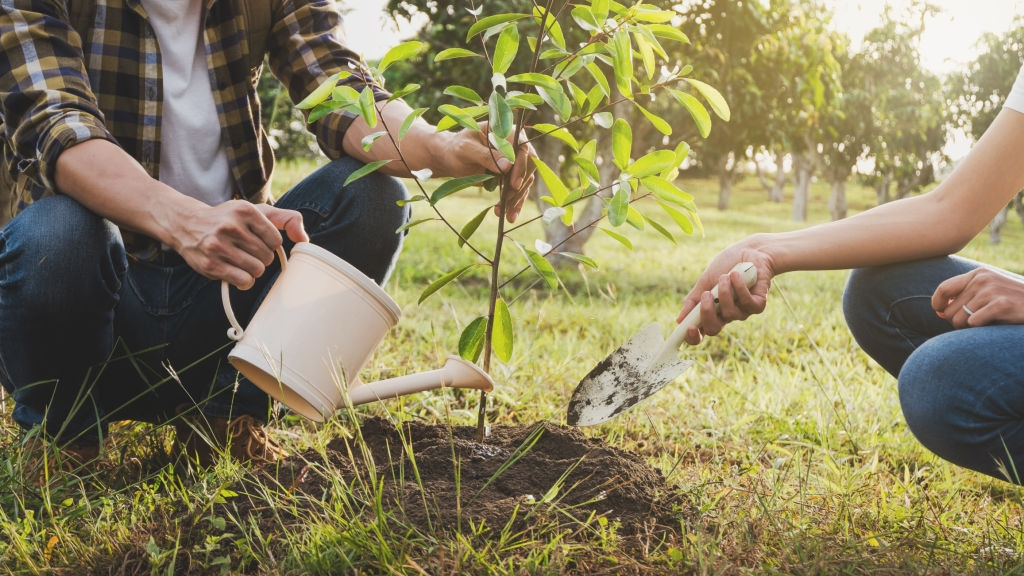 When Should You Be Watering Your Trees in Fall?