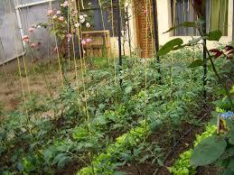 size of vegetable garden