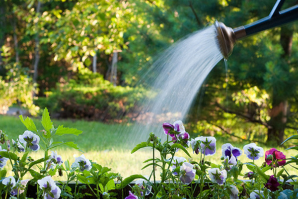What Is The Best Time To Water Your Plants In Summer??
