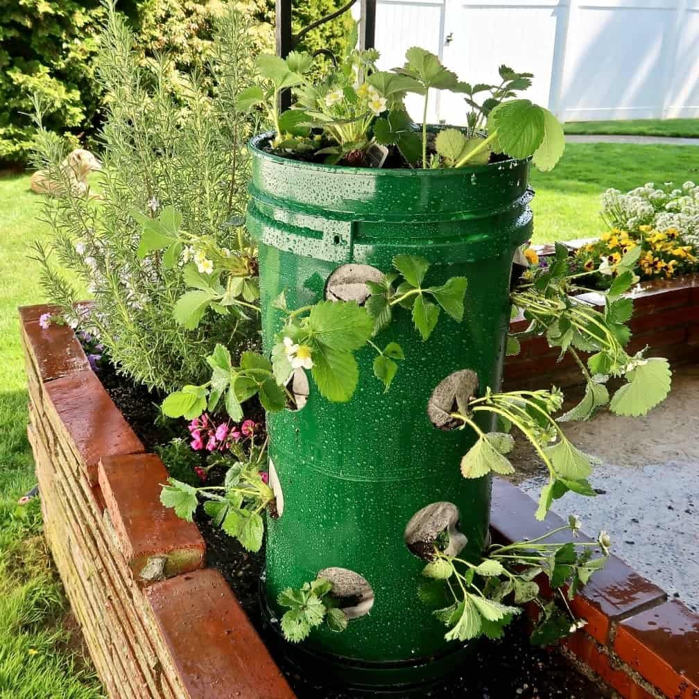 upcycled plastic bucket for strawberry plant tower garden idea