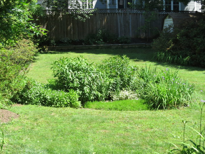 How To Build A Rain Garden – A Complete Step By Step Guide To Make Own Rain Garden At Home