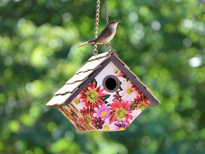 How to Hang a Birdhouse