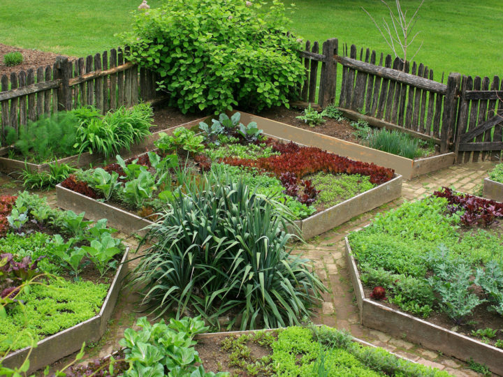 How to Start a Homestead? – Guide for Beginners