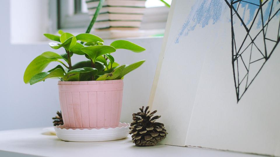 List Of Popular Indoor House Plants