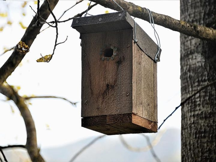 Bird Roosting Box-A Cozy Winter Shelter For Birds