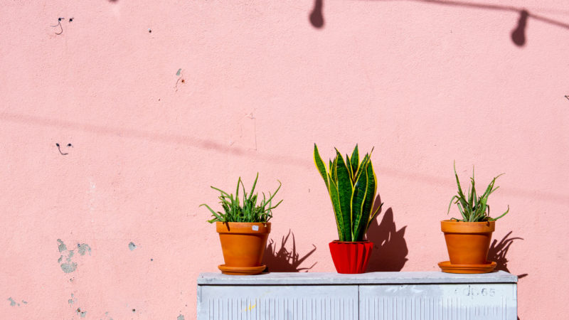 Best Feng Shui Plants to Bring Good Luck in Your Home