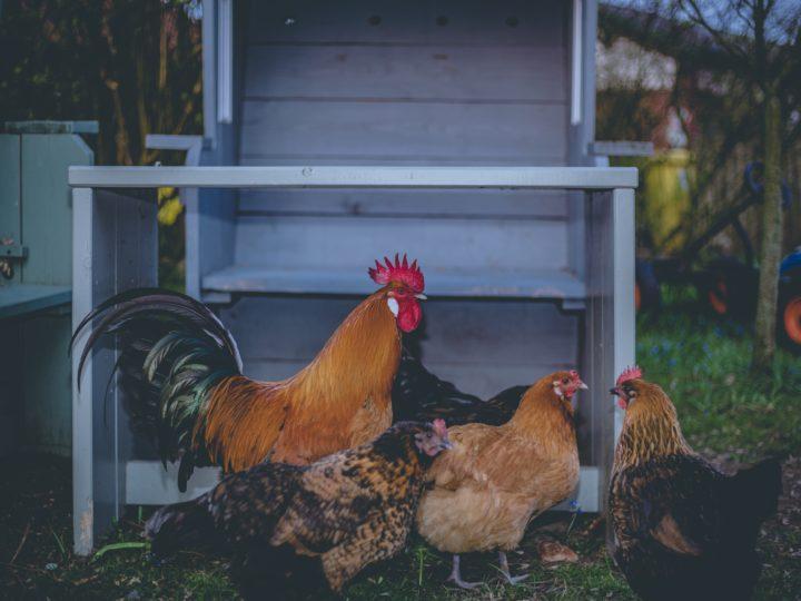 Profitable Small Farm Ideas – Creative Ways to Make Money from Your Farm