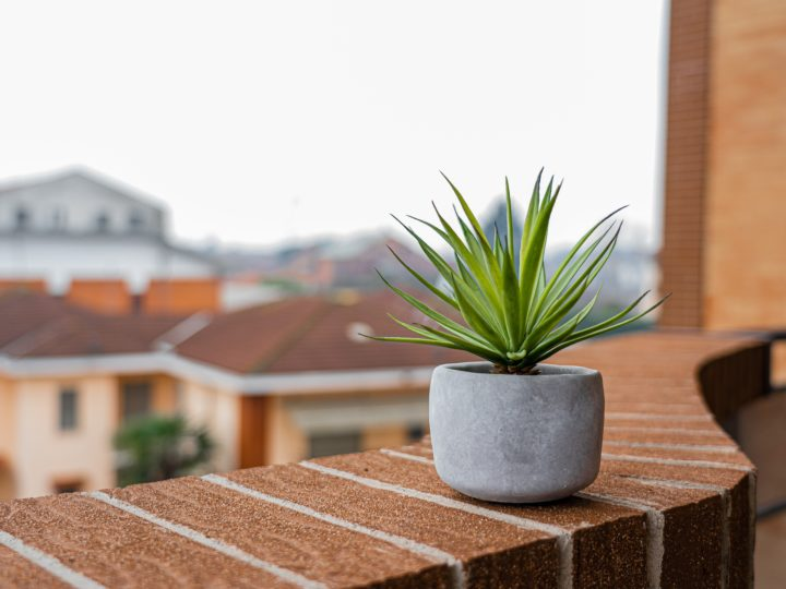Best Plants for Balcony to Locate Bloom to Your Home
