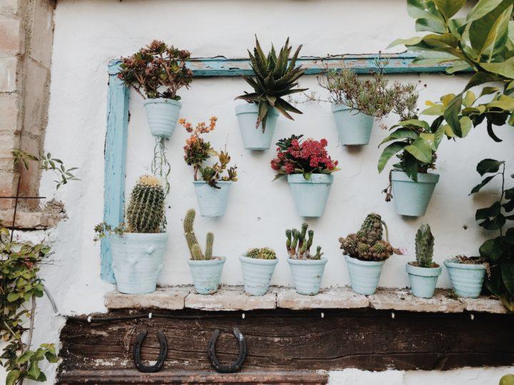Some Terrific Plant Wall Décor Ideas