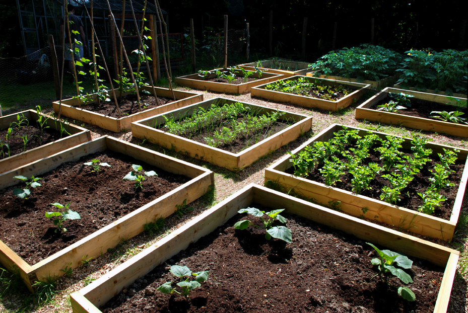 Full Guide On How To Make A Raised Garden Bed At Home