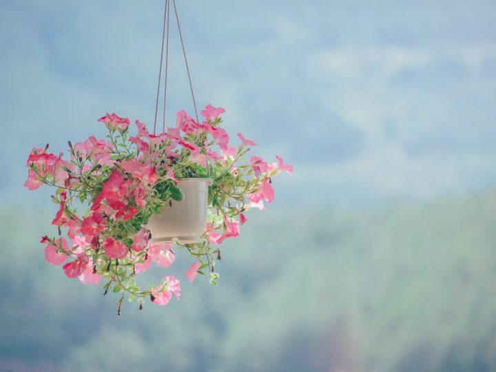 Best Flowering Plants For Hanging Baskets
