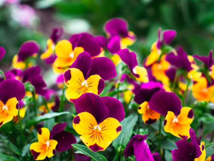 Outdoor Winter Plants to Add Colors to Your Winter Garden