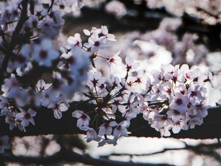 Most Popular Types Of Magnolia Trees