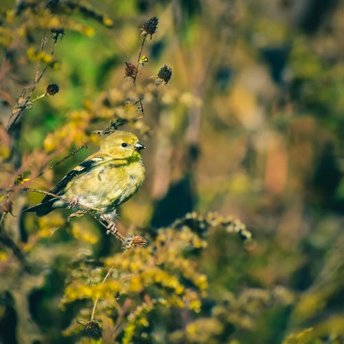 Common Backyard Birds You Can Spot In The U.S