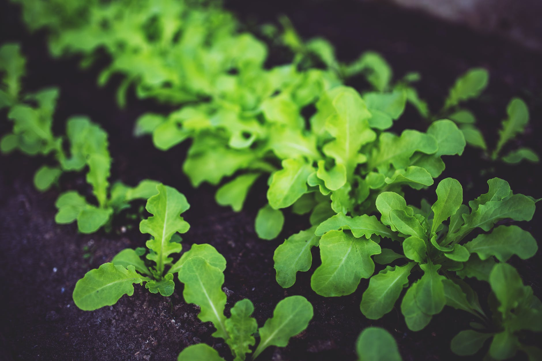 Tips & Tricks To Grow Vegetables Indoors