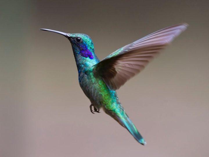 Most Common Species Of Birds Seen In Hawaii