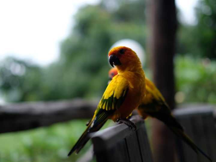 The Smartest Birds That You Can Keep As Pets