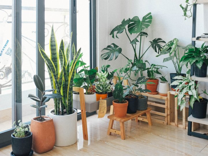 Decorative Plants to Introduce a Lush Green Touch to Your Home Decor