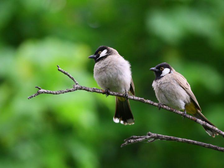 Most Common Backyard Birds of Michigan