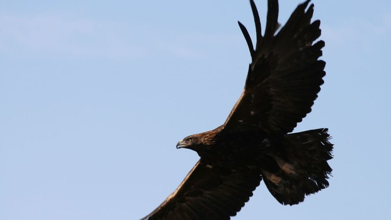 13 Beautiful Colorado Birds To Watch