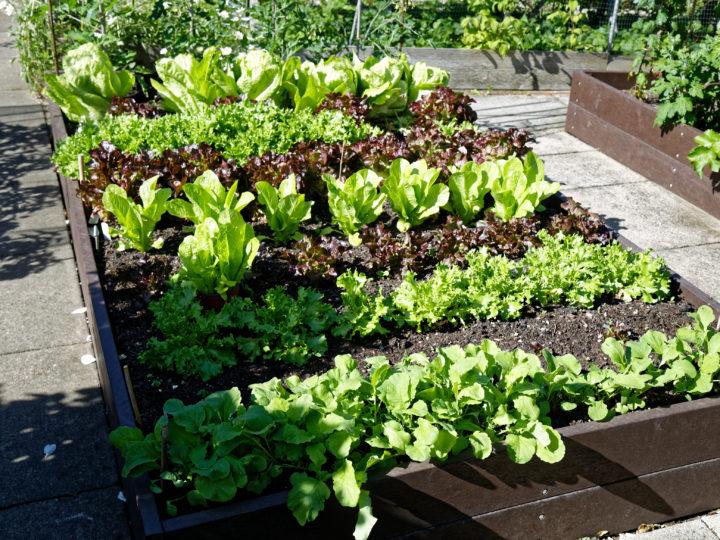 Amazing Backyard Vegetable Garden Ideas to Make Your Own Vegetable Garden