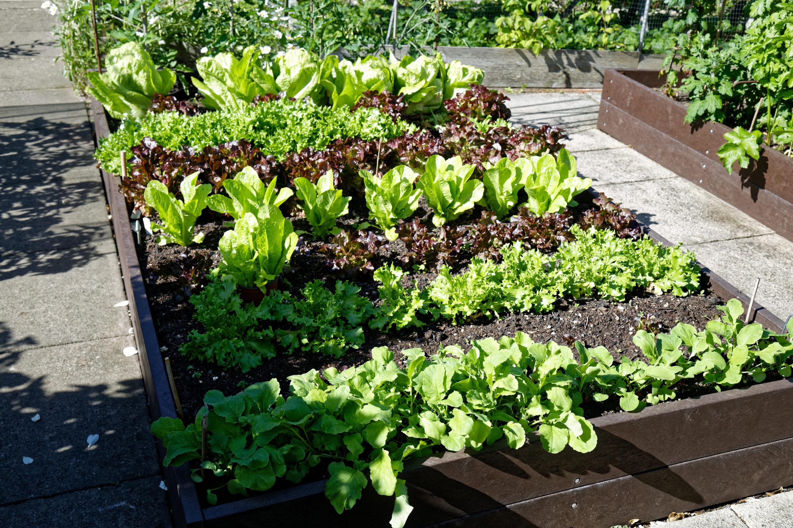 Backyard Vegetable Garden Ideas To Make Your Own Vegetable Garden
