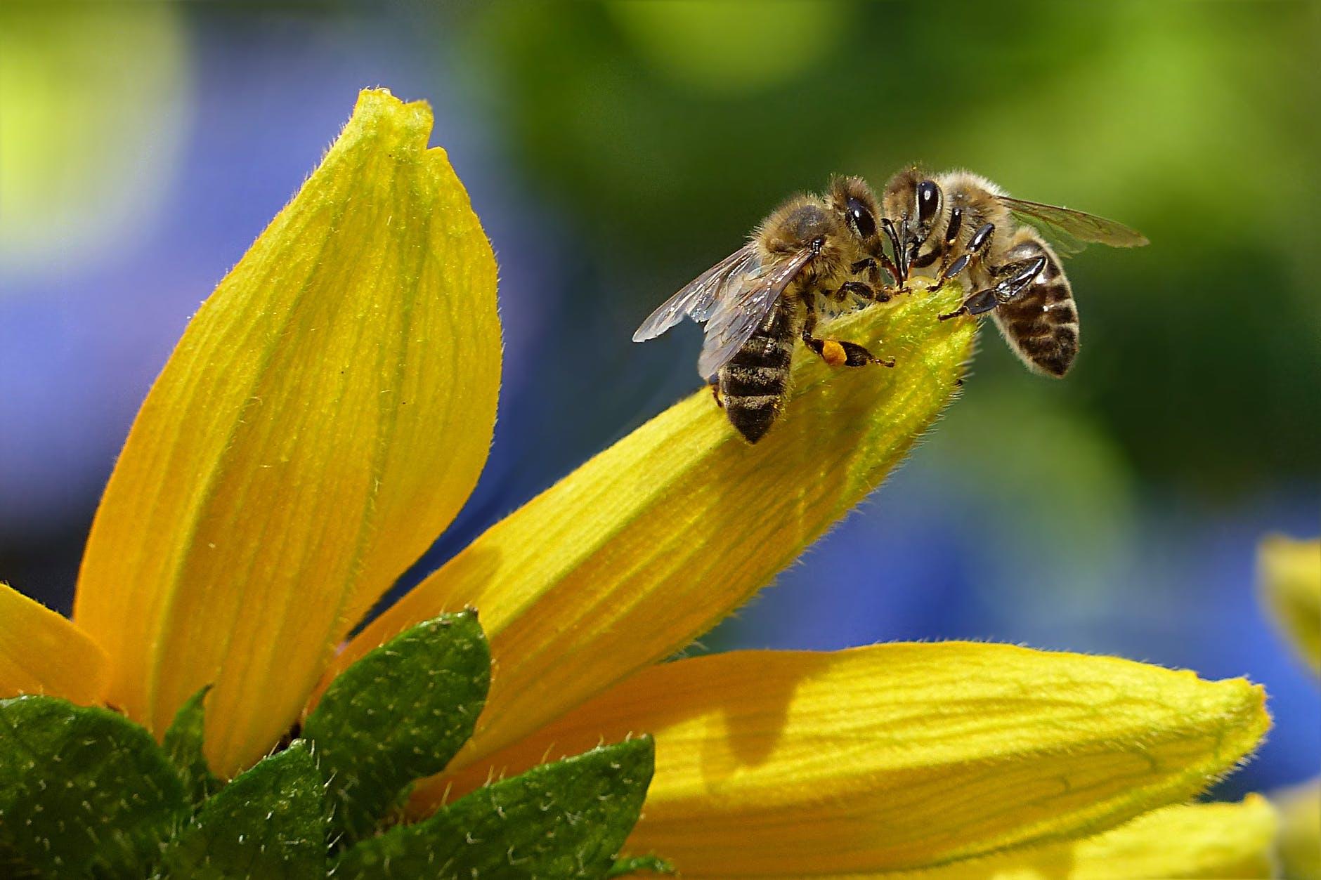 Effective Natural Bee Repellent Methods To Keep Your Garden Bee-Free