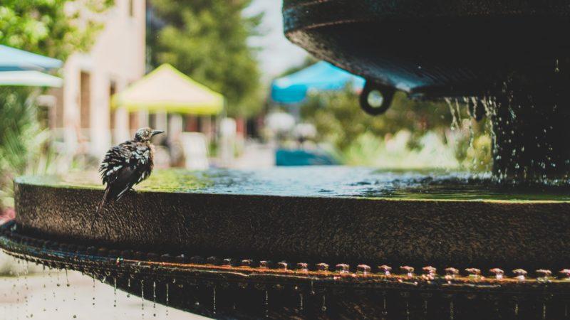 Best Bird Bath For A Summer Time Dip & Sip