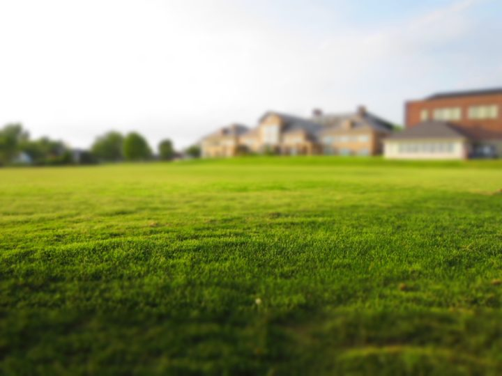 Organic Weed Control Methods to Manage a Healthy and Beautiful Yard