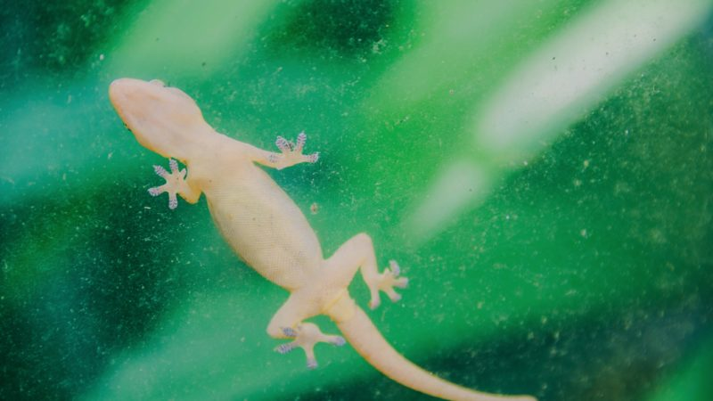 How to Get Rid of Lizards? – Say Bye to Pesky Lizards