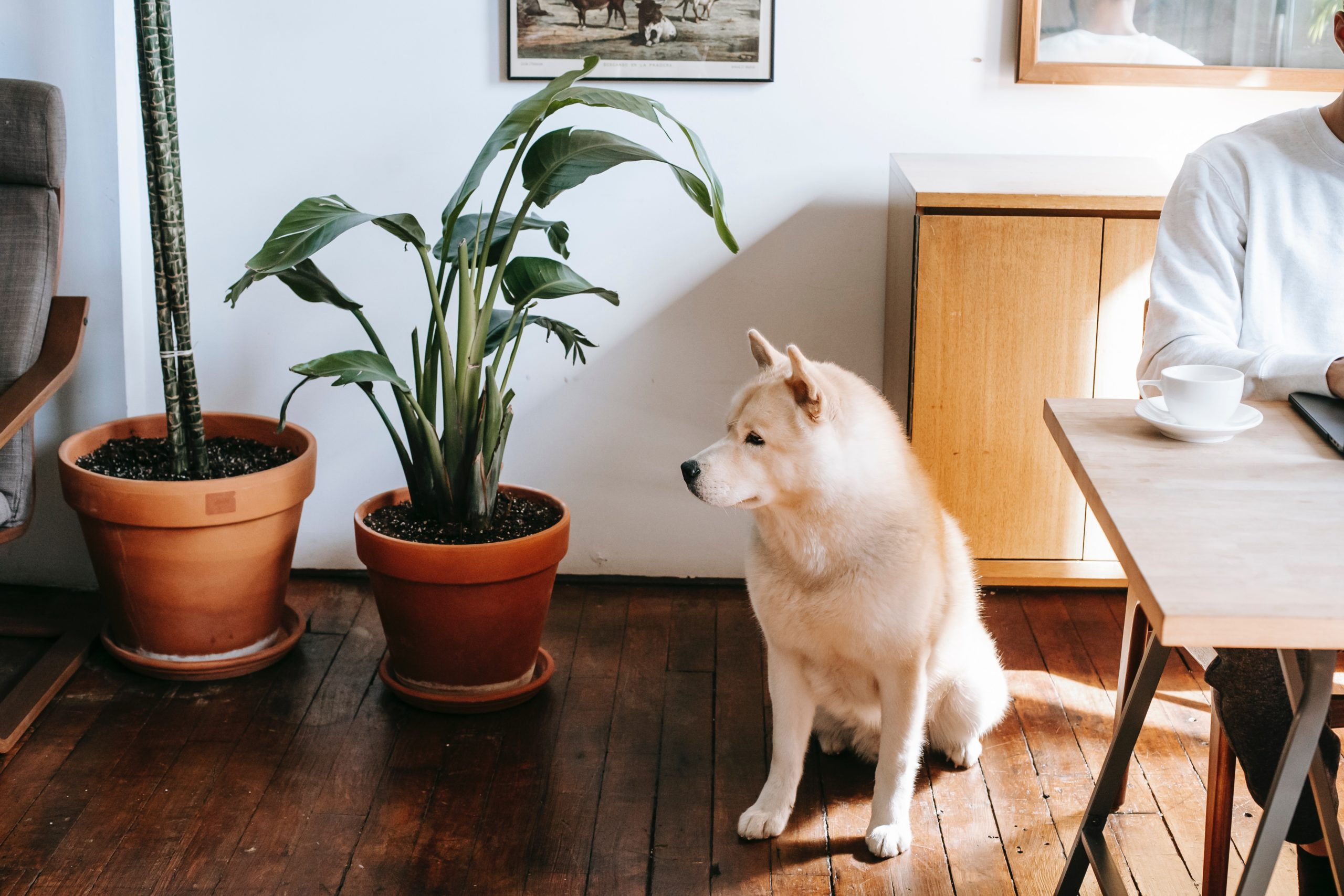 Plants Toxic to Dogs You Should Avoid Having in Your Home