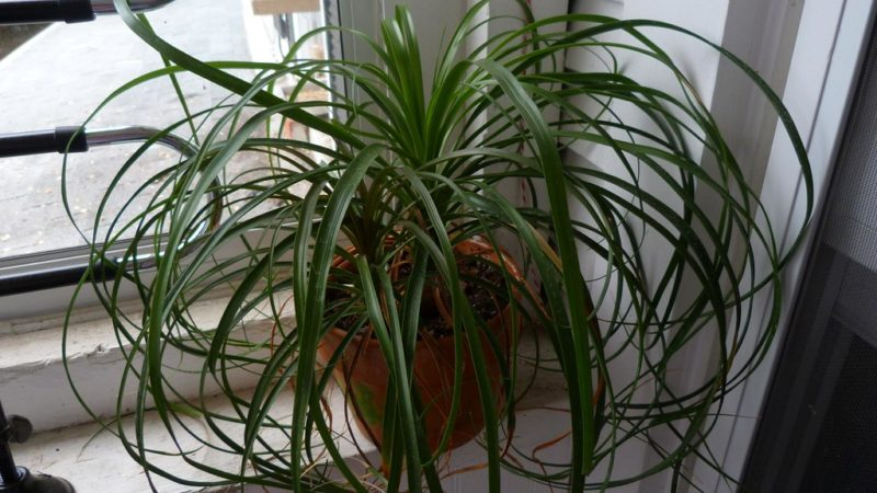 Different Types Of Indoor Palm Trees For An Fanciable Home