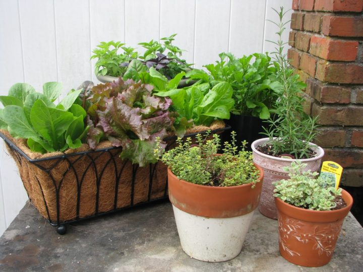 Easy Vegetable to Grow in Pots: Now Grow Vegetables Without a Garden Patch