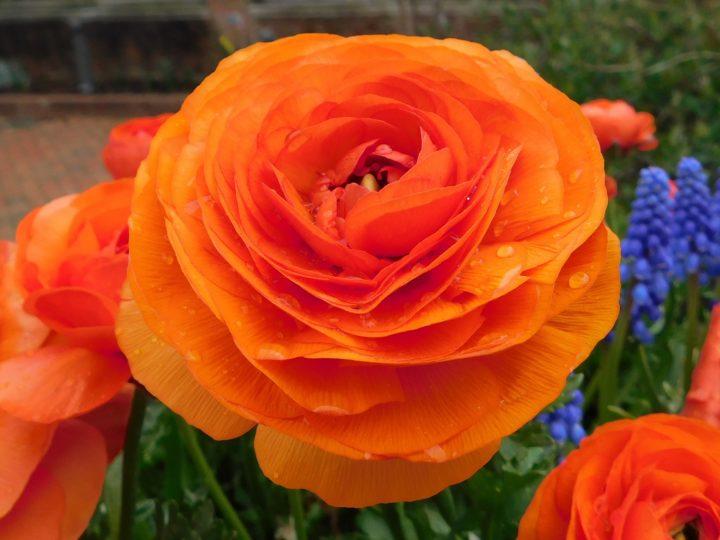 Astonishing Winter Flowers For A Frosty Vibrant Garden Bloom