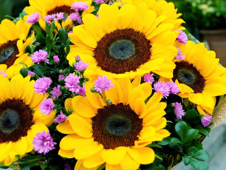 Beautiful Flowers that Bloom All Summer to Add a Colorful Touch to Your Garden