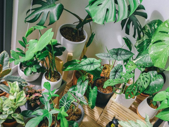 Best Houseplants for Beginners to Start Your Collection