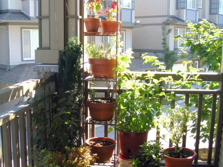 How To Create A Appealing And Blooming Balcony Garden