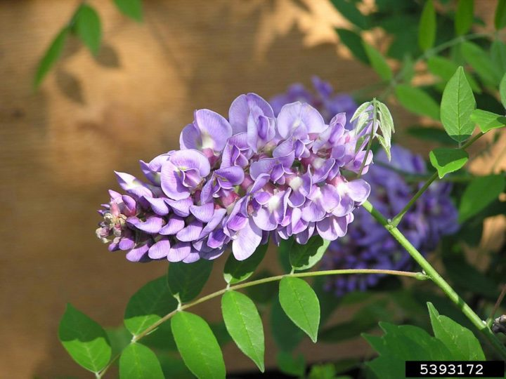 Fanciable Ornamental Plants To Have A Alluring Garden