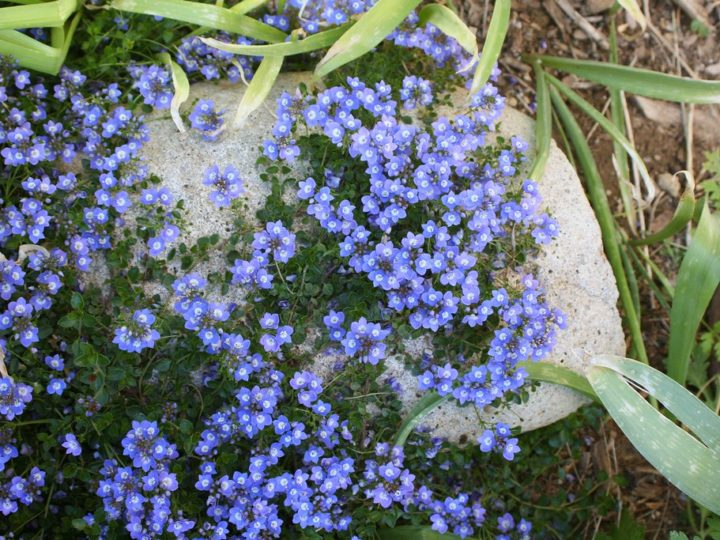 Attractive Low Maintenance Ground Cover Plants For Landscaping