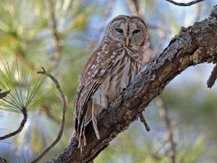 Beautiful Birds that Sing at Night