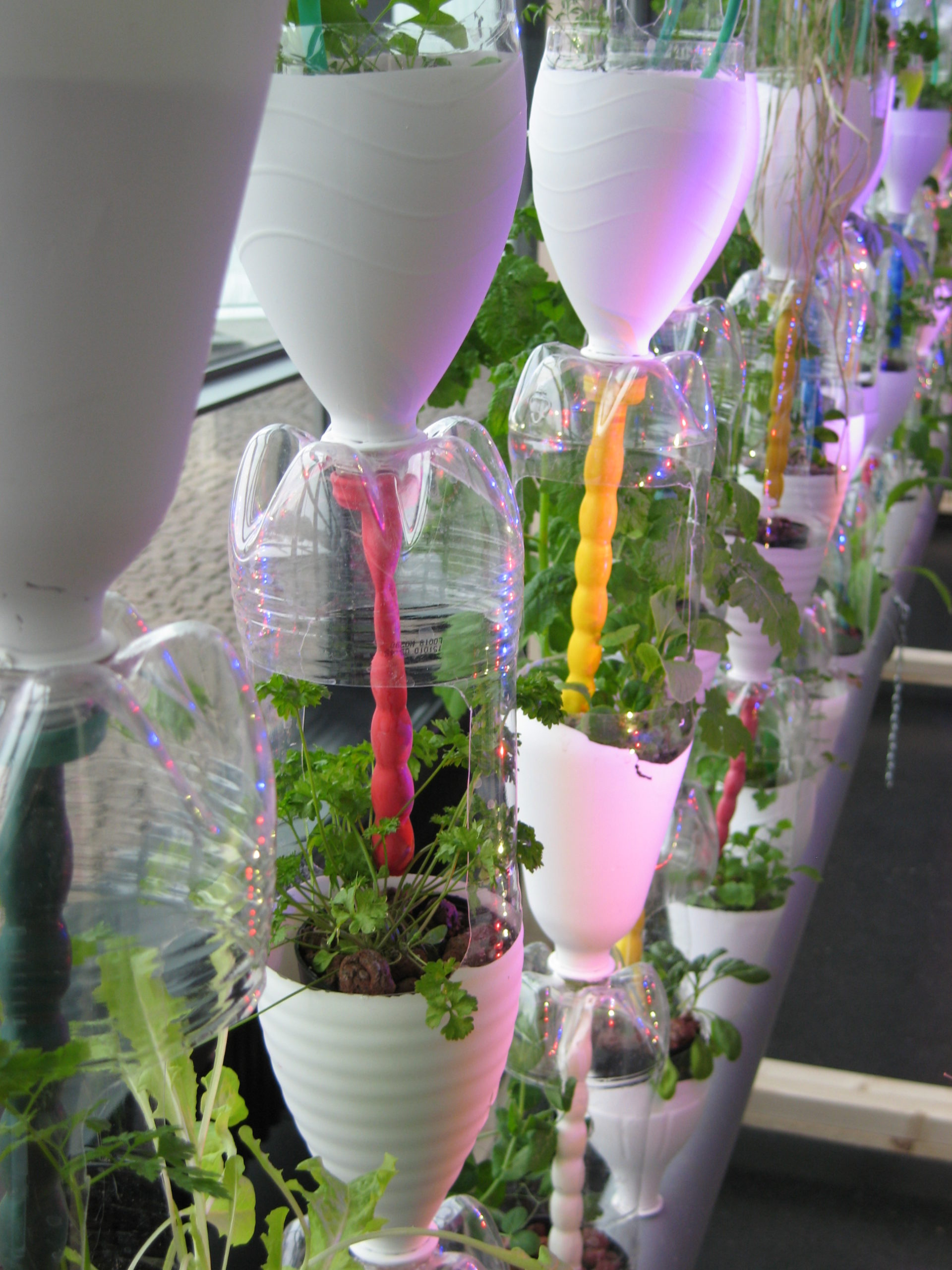 How To Create A Compact Hanging Vegetable Garden At Home
