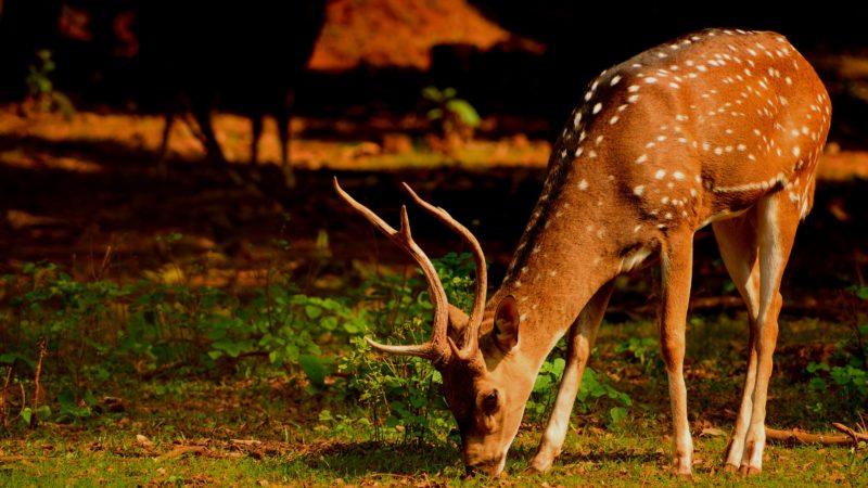 Deer-Resistant Plants That Are Do Not Make Deer Approved Menu