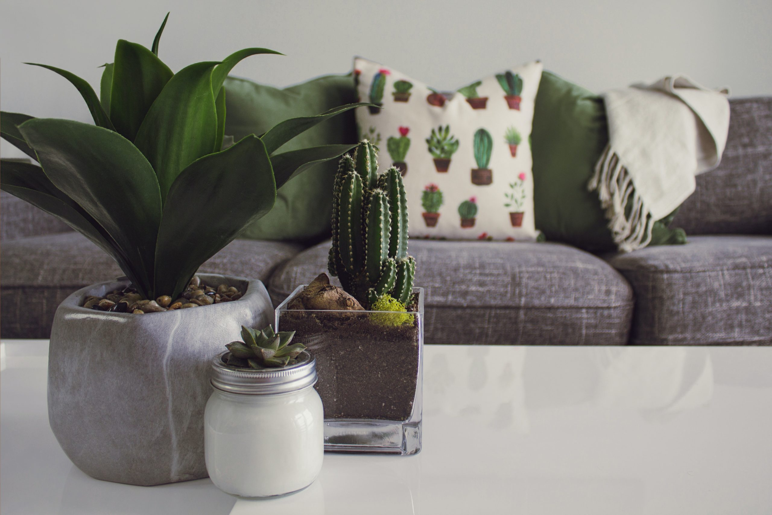 Best Indoor Plant Pots To Buy Online