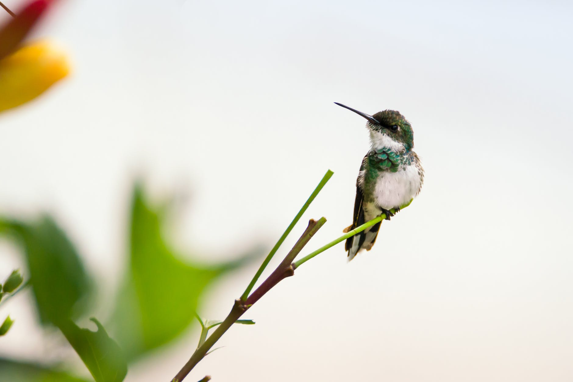 Best Tips To Attract HUmmingbirds In Your Yard