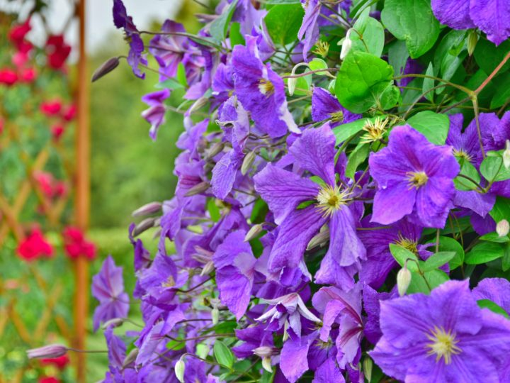 Beautiful Low-Maintenance Landscaping Plants for a Worry-Free Landscape